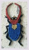 Image of Notre coléoptère bleu ...