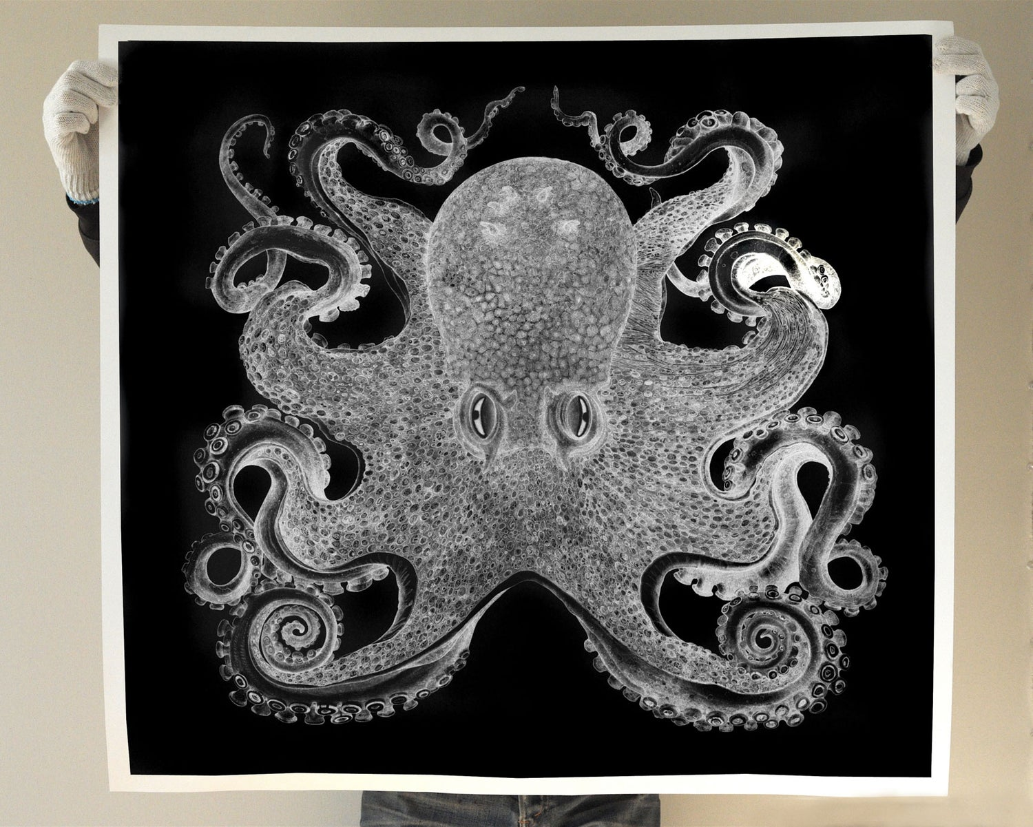 Image of 36 x 40 inch Octopus Limited Edition of 10.
