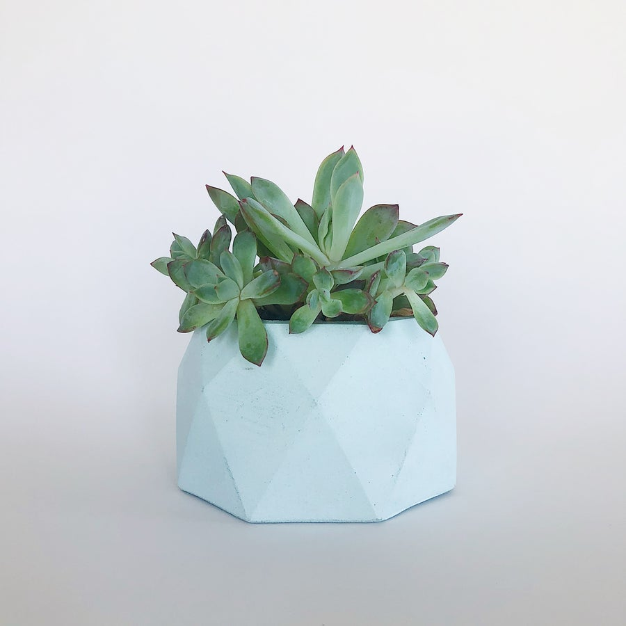 Image of Planter - Jewel [Pastel Mint]