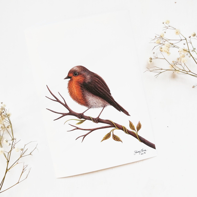 Image of Robin - Fine Art Print