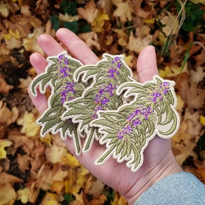 Image of Cannabis Patch