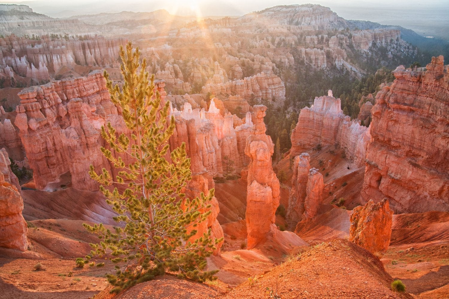 Image of Bryce Canyon Morning