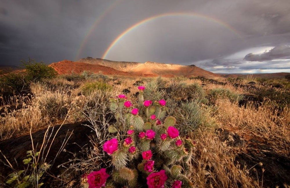 Image of Desert Rainbow
