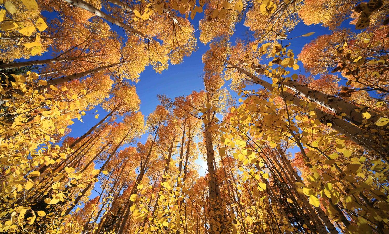 Image of Fall Back