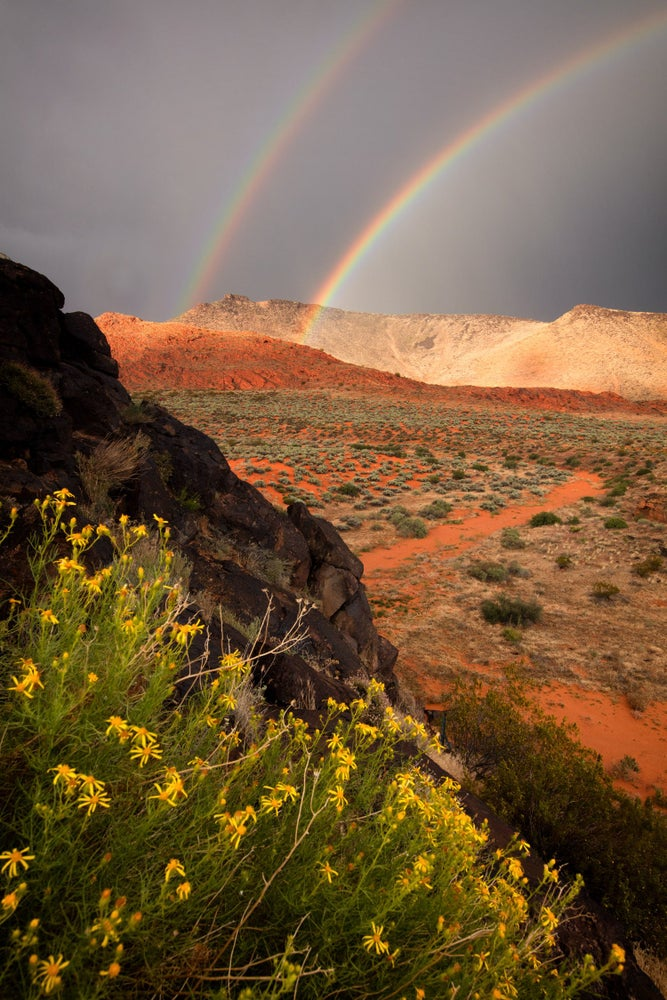 Image of Flowers and Rainbow