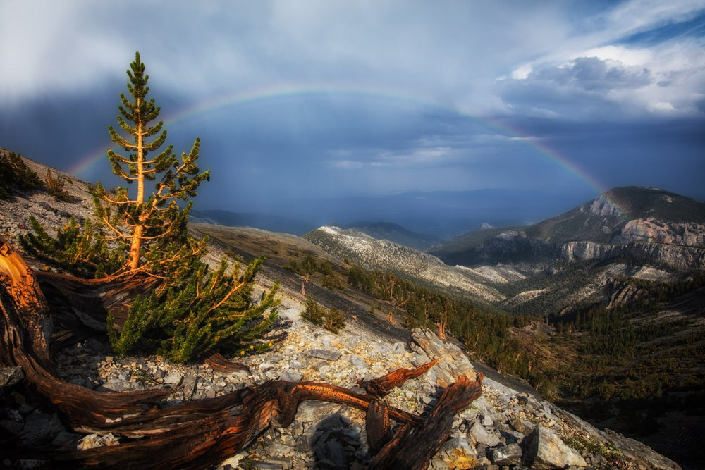 Image of Great Basin Rainbow