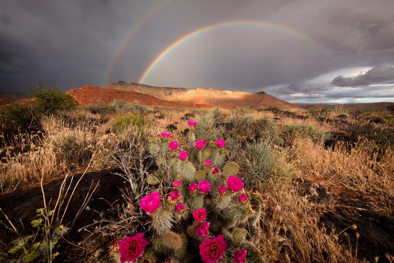 Image of Spring Rainbow