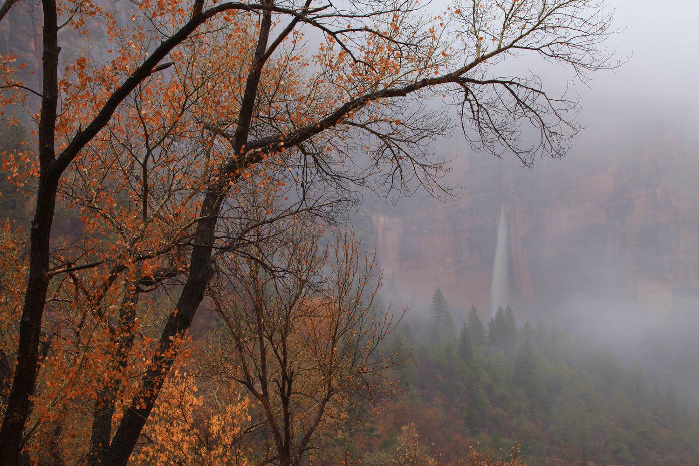 Image of Zion Fog