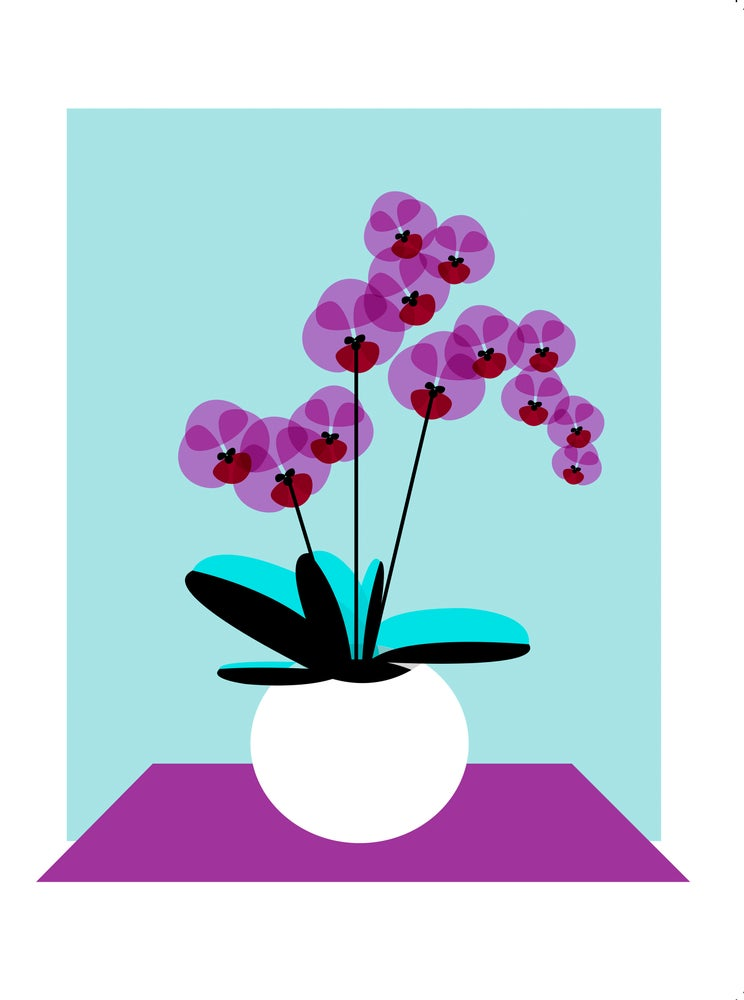 Image of Orchid