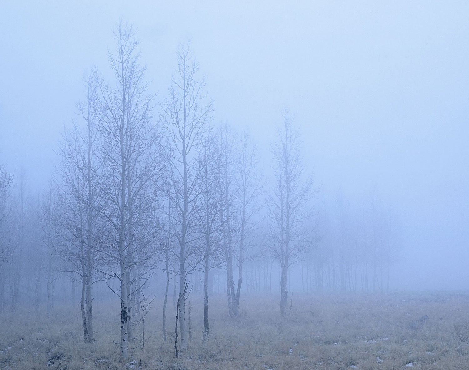 Image of Winter Fog, San Francisco Peaks, Arizona