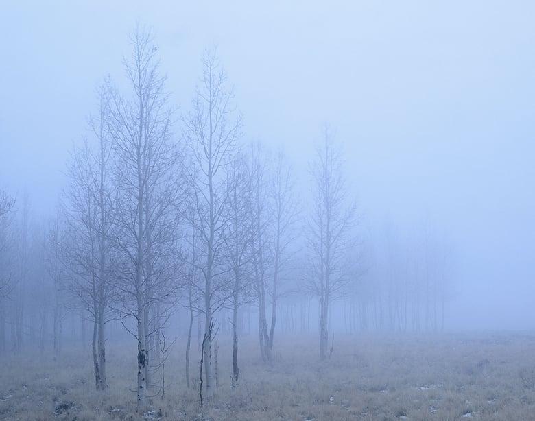 Image of Winter Fog, San Francisco Peaks, Arizona