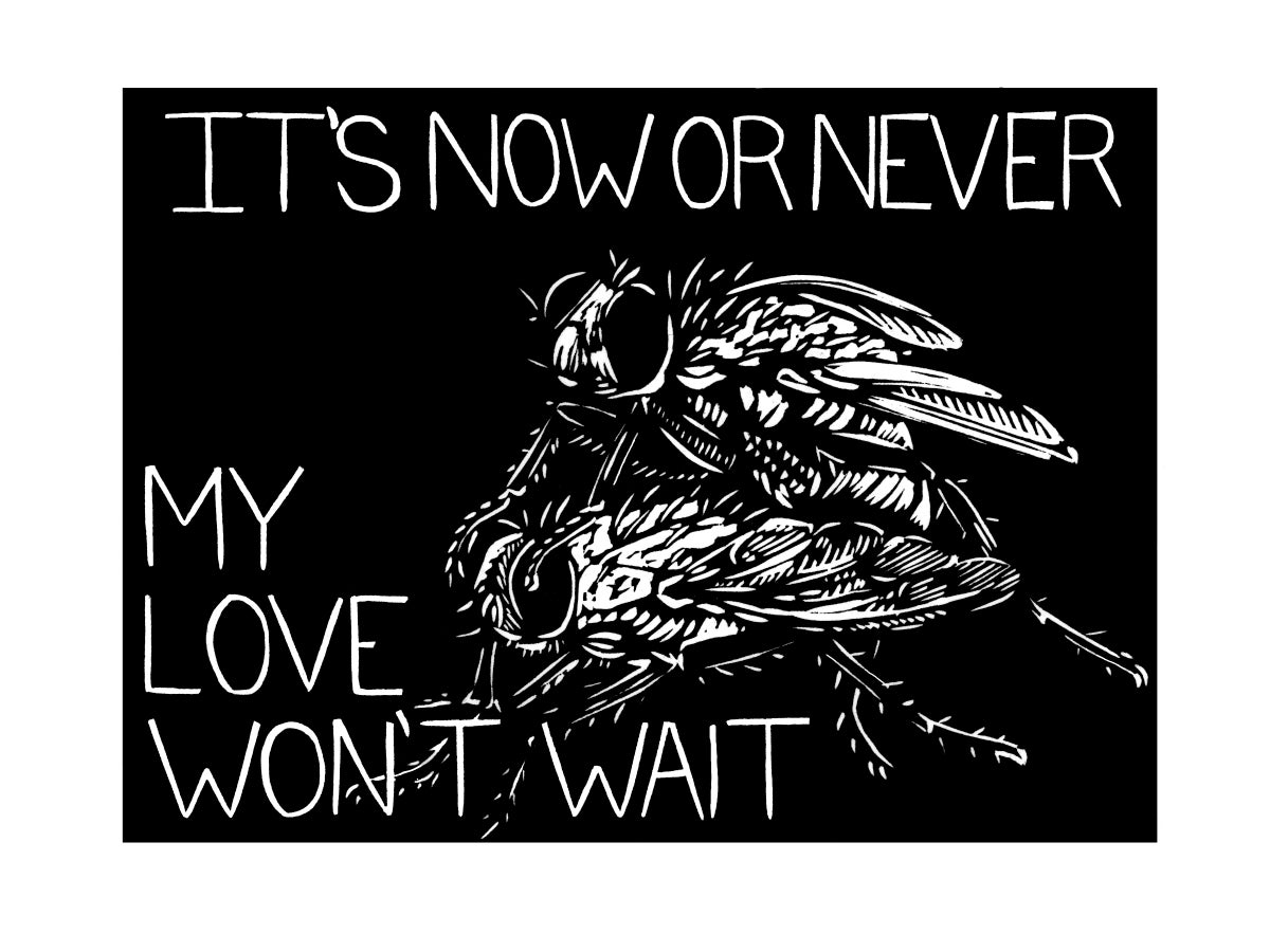 Image of I Love You, But (House Flies)