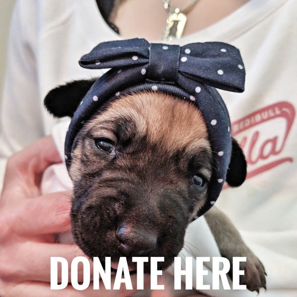 Image of Deer's Vaccinations - Donate