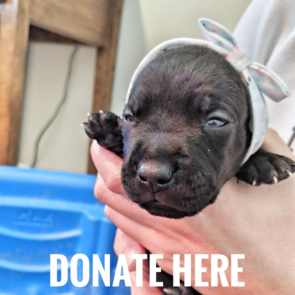 Image of Eddie's Vaccination - Donate
