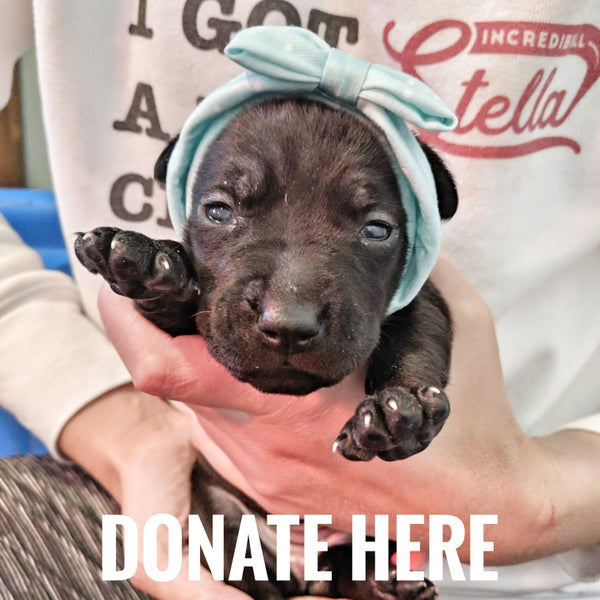 Image of Alaska's Vaccinations - Donate