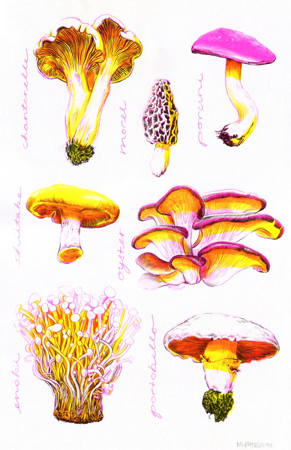 Image of Mushrooms