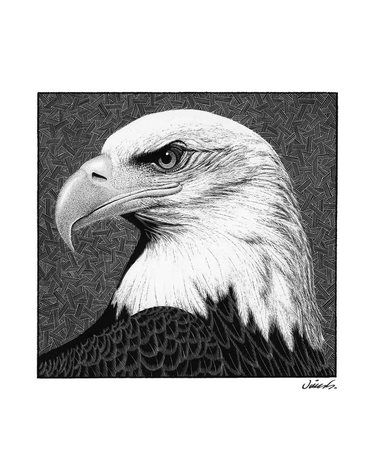 Image of BALD EAGLE poster print