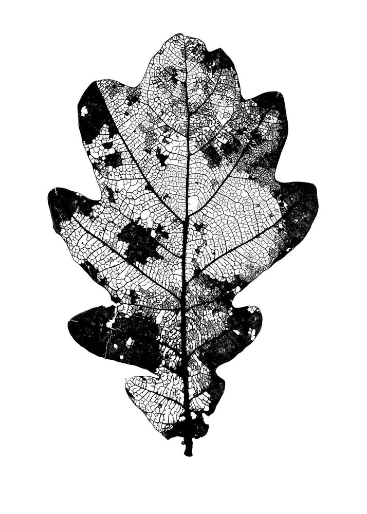 Image of Leaf
