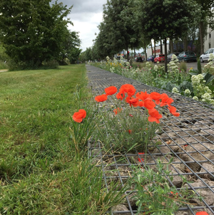 Image of GANG COQUELICOT