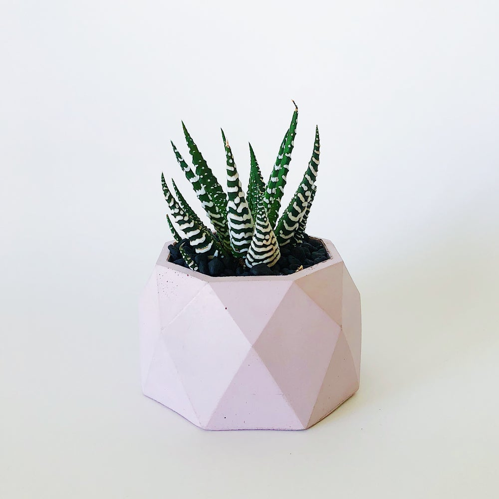 Image of Planter - Jewel [Blush Pink]