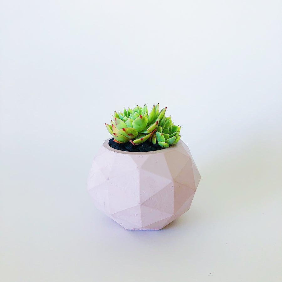Image of Planter - Clover [Blush Pink]