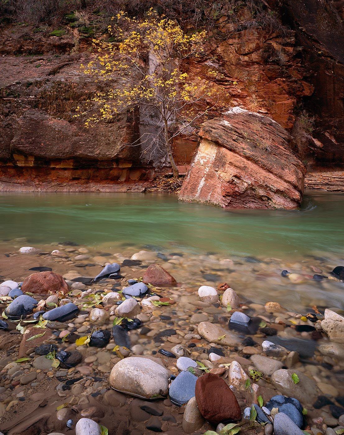 Image of Cobbles & Tree, Zion National Park, Utah