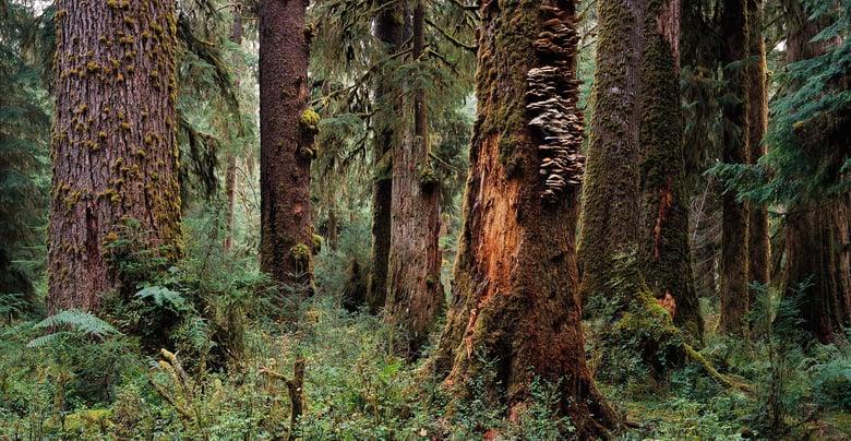 Image of Enchanted Forest, Olympic National Park, Washington