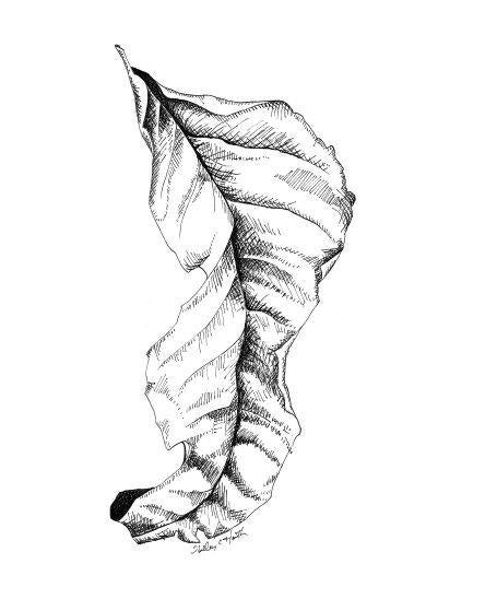 Image of Delicate Leaf