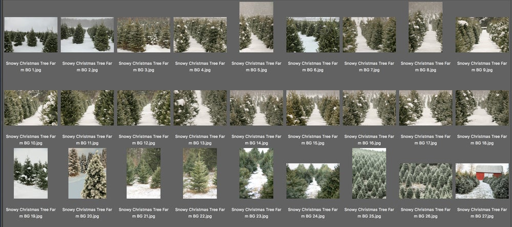 Image of Snow Covered Christmas Tree Farm Digital Backgrounds