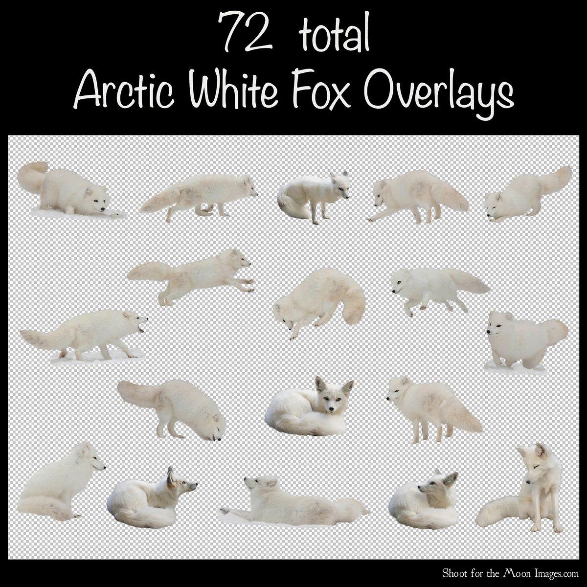 Image of Arctic Fox Overlays Set