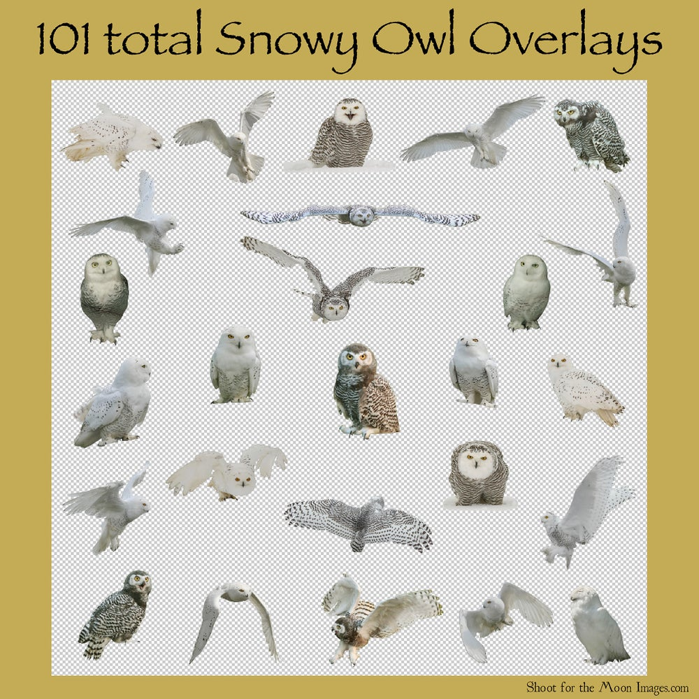 Image of Snowy Owl Overlays Set