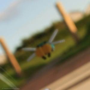 Image of Frogger - Rib-bit