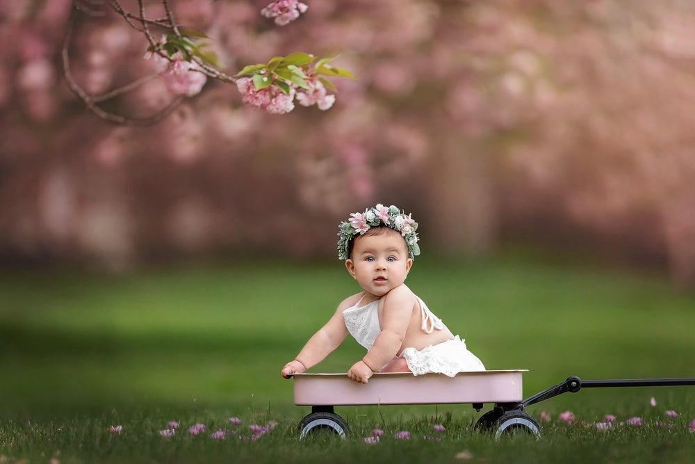 Image of Cherry Blossom Mini Session