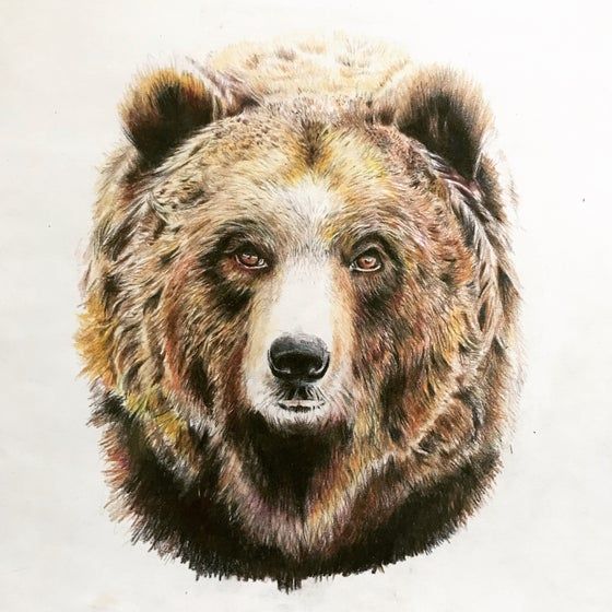 Image of Bear of the West