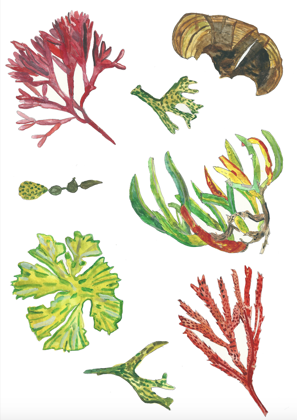 Image of Seaweed - A Greeting Card