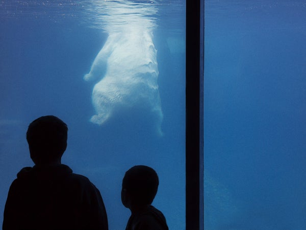 Image of Polar Bear | Christopher Borrok (2012) | Limited Edition Prints