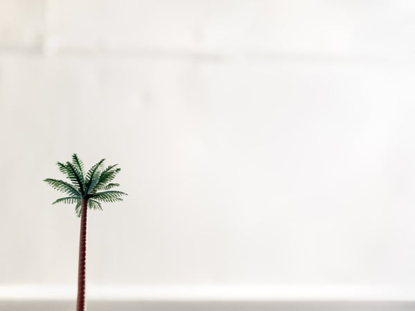 Image of Plastic Palm | Christopher Borrok (2012) | Limited Edition Prints