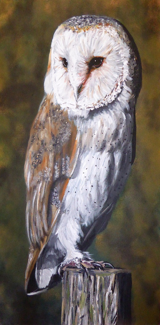 Image of Barry Barn Owl