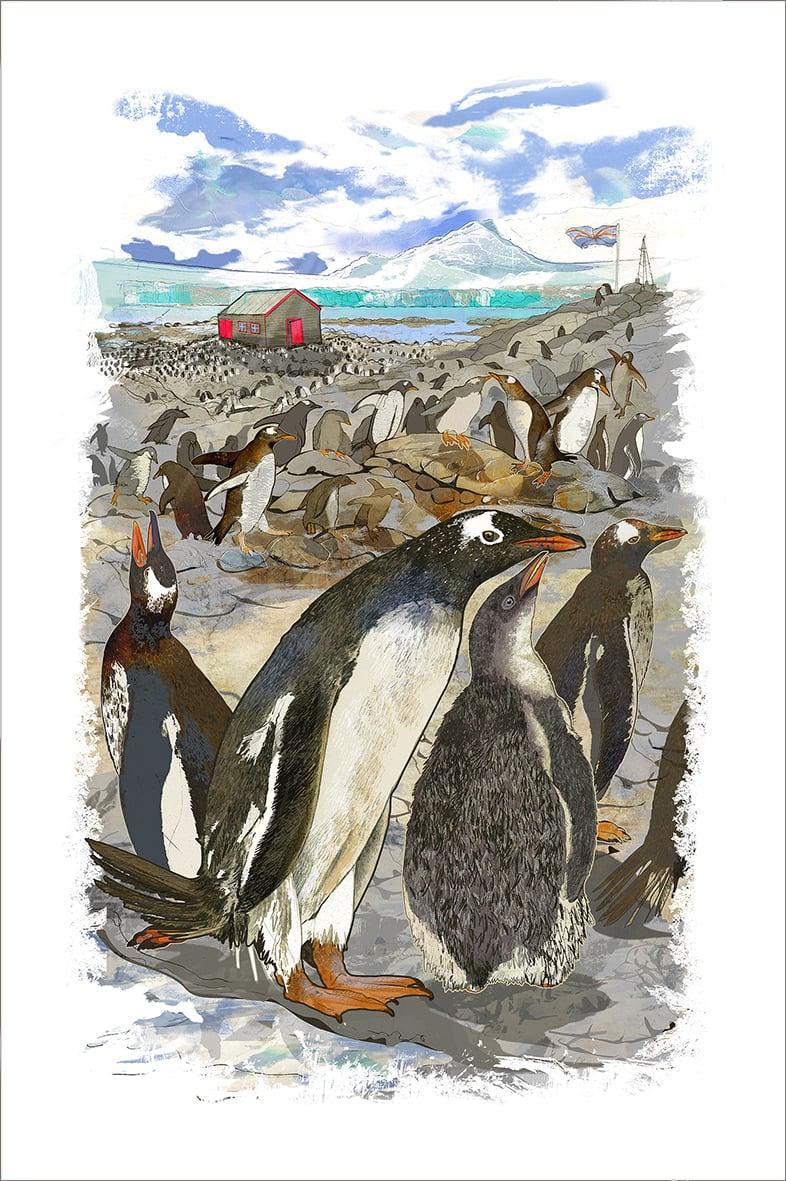 Image of Gentoo Colony - Port Lockroy - Antarctica