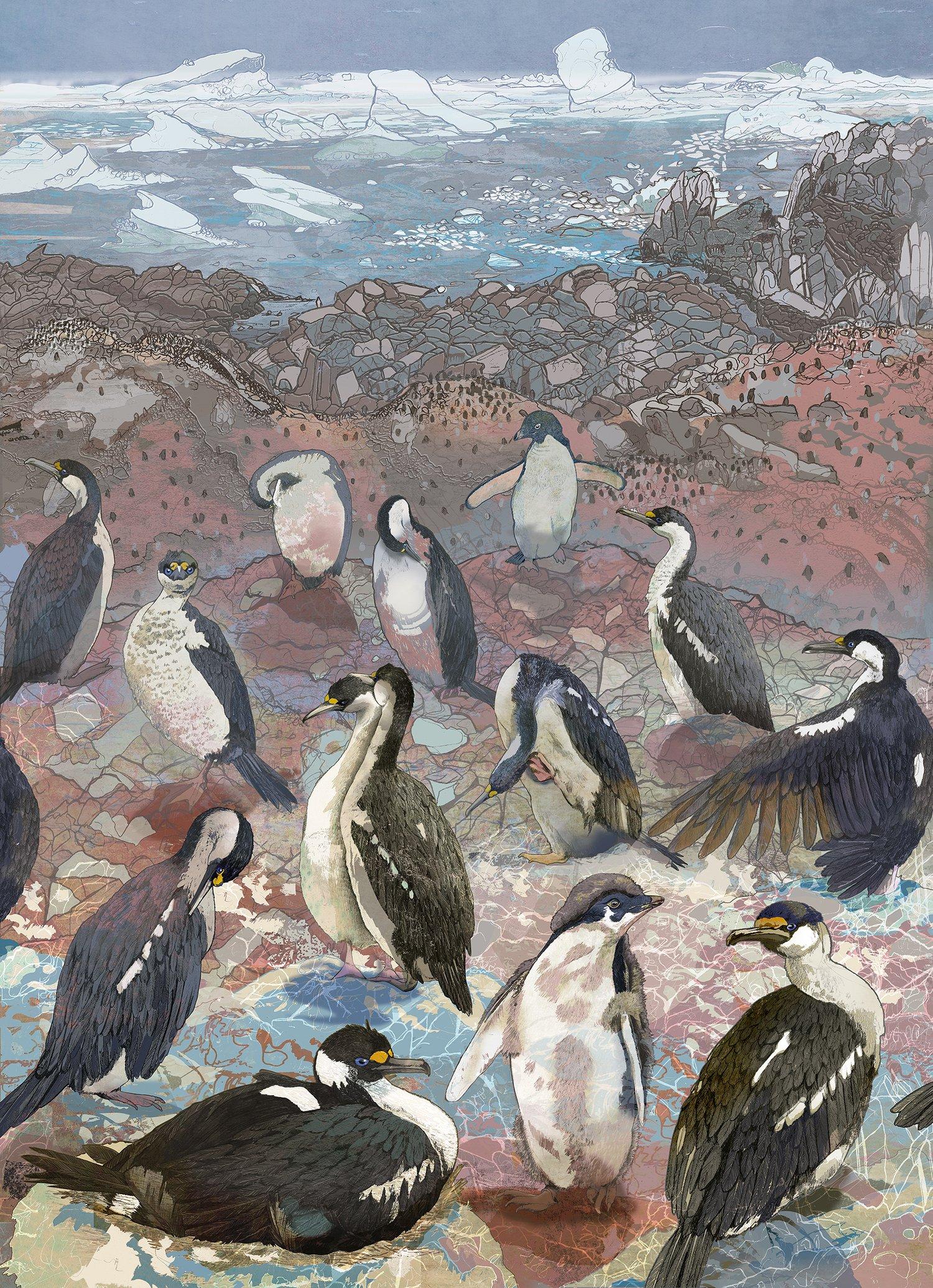 Image of Colony Life - Lagotellerie Island - Antarctica