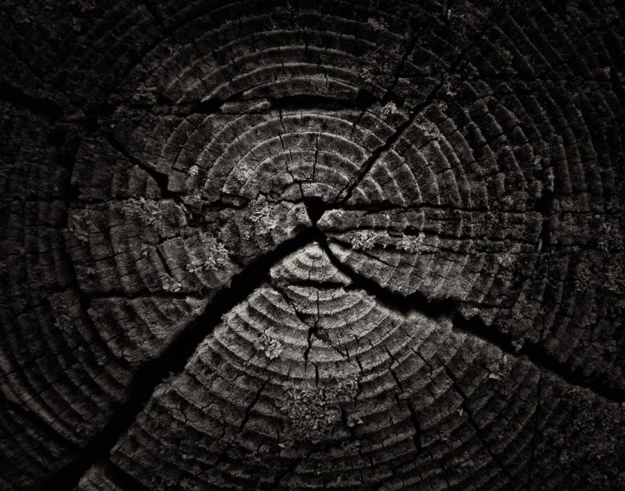 Image of Tree Rings