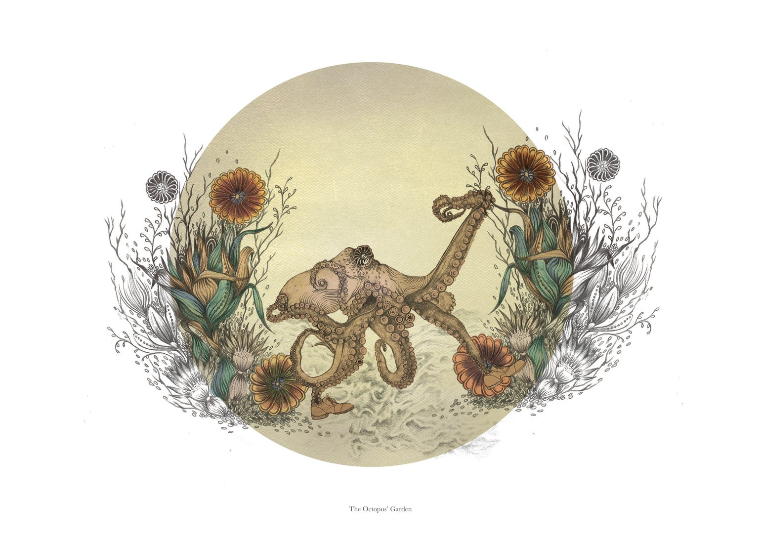 Image of The Octopus' Garden
