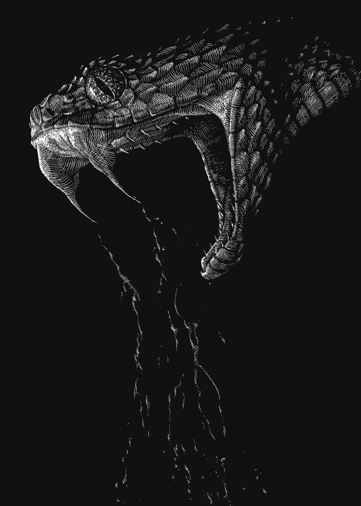 Image of Snake
