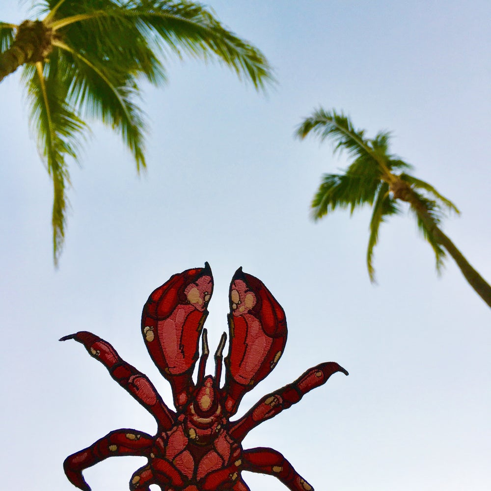 Image of Red Coconut Crab