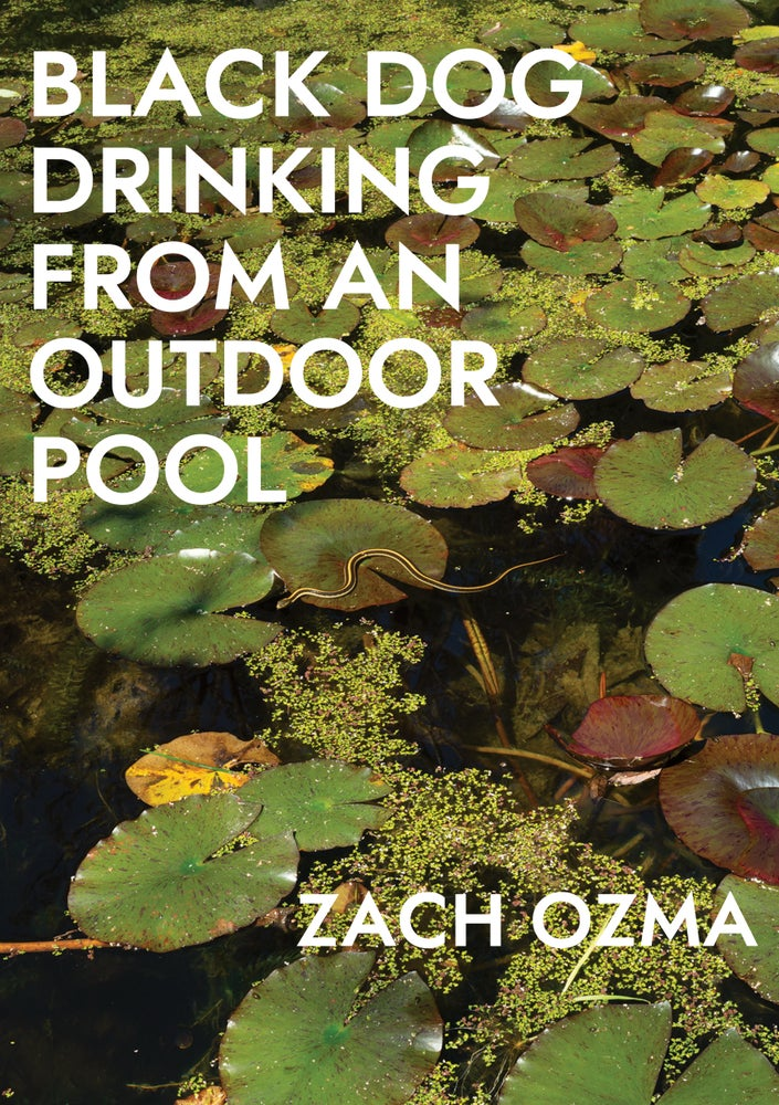 Image of Black Dog Drinking from an Outdoor Pool by Zach Ozma