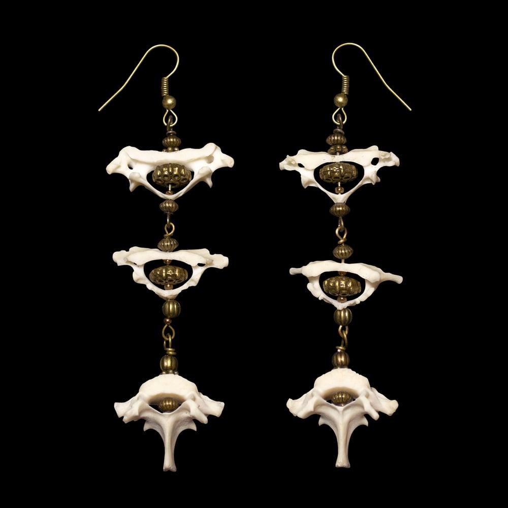 Image of Armadillo Vertebrae Earrings
