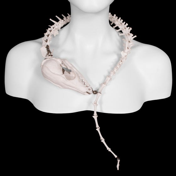 Image of Complete Fox Spine Wrap Necklace