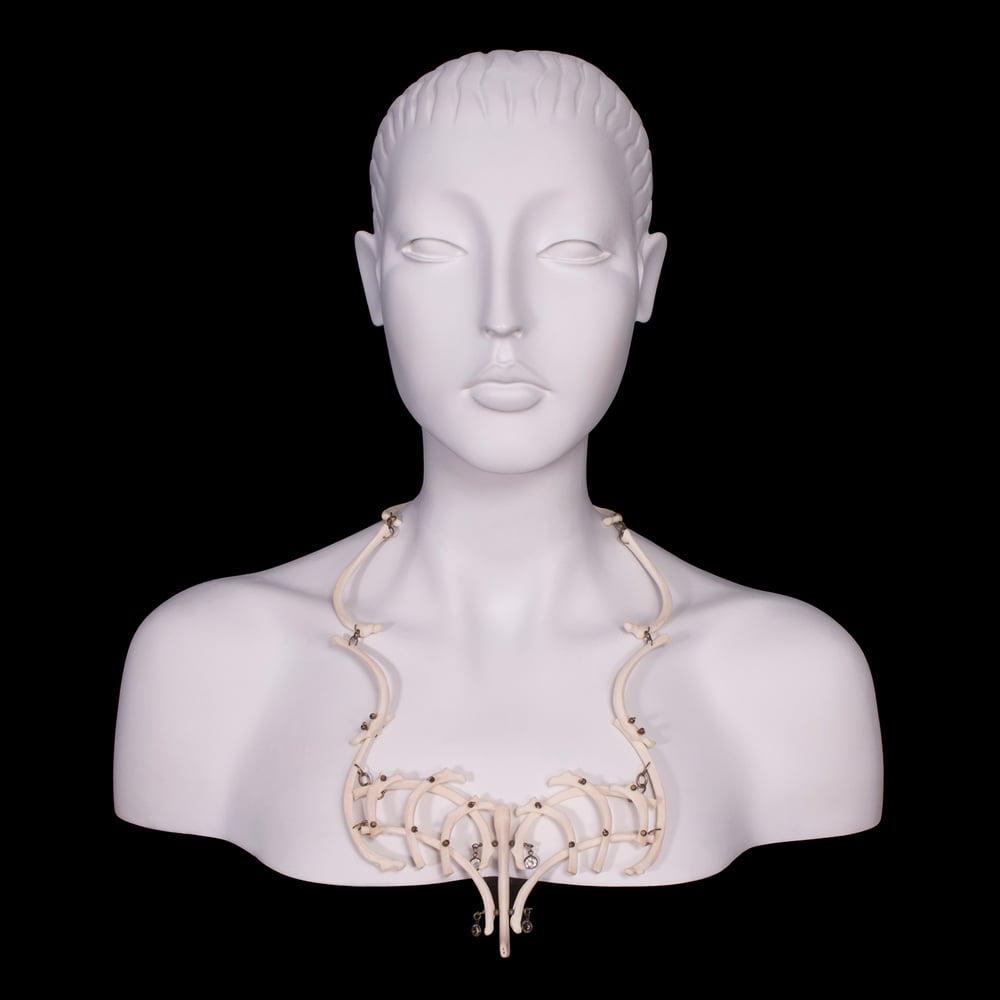 "Image of ""Lutro"" Otter Rib & Baculum Necklace"