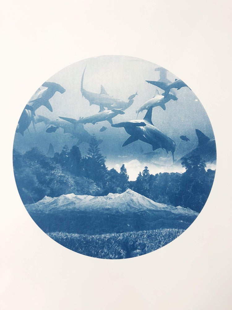 Image of Sharks