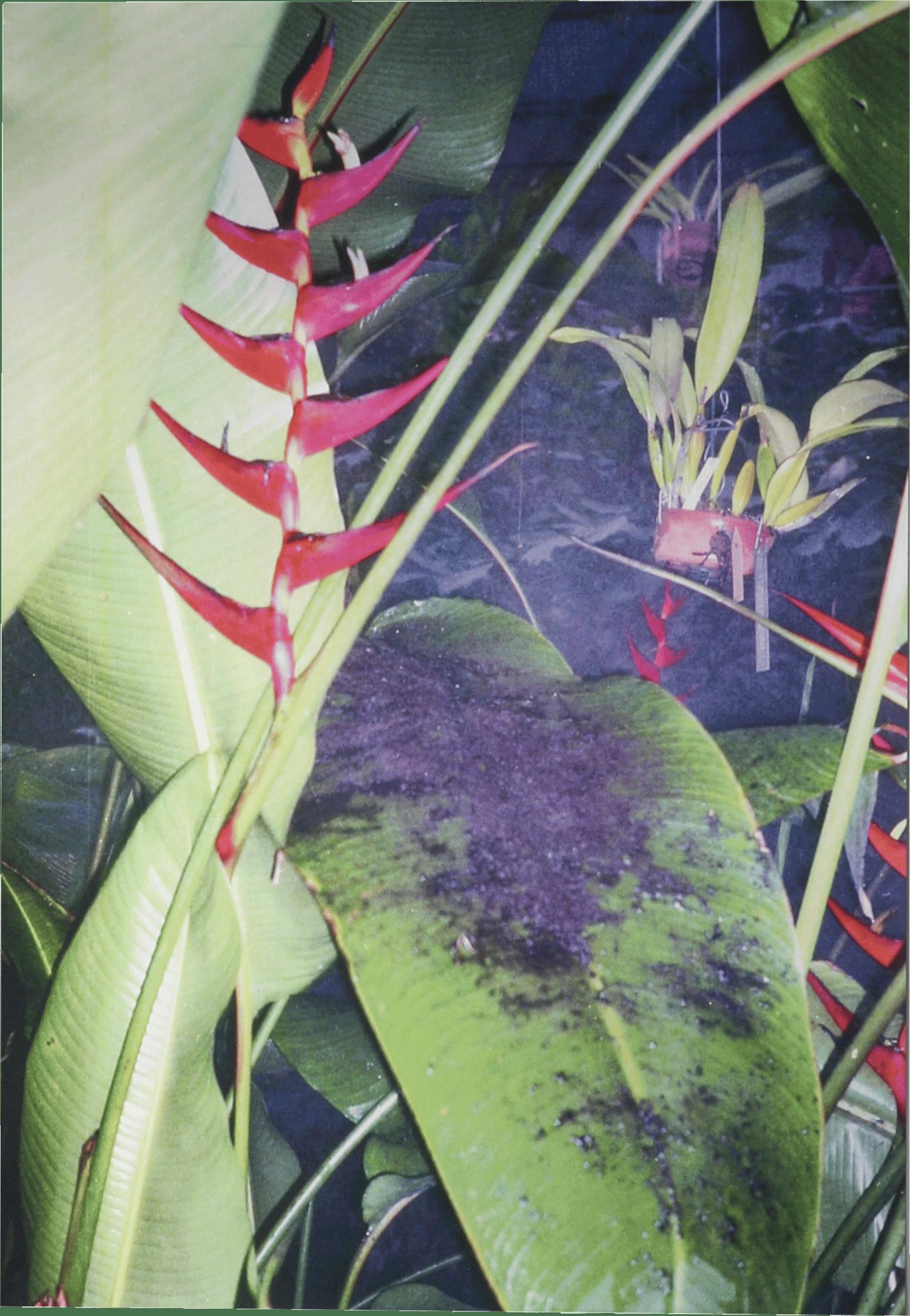 Image of HAPPY HOUR metallic print Collection - Plants 45x31cm